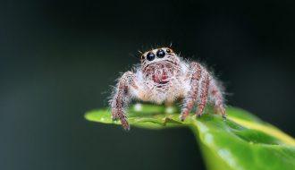 Spider Treatment Pest Control